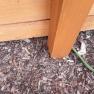 medinės tvoros įrengimas